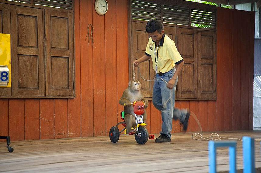 Phuket Zoo offers some fun entertainment for the whole famlily