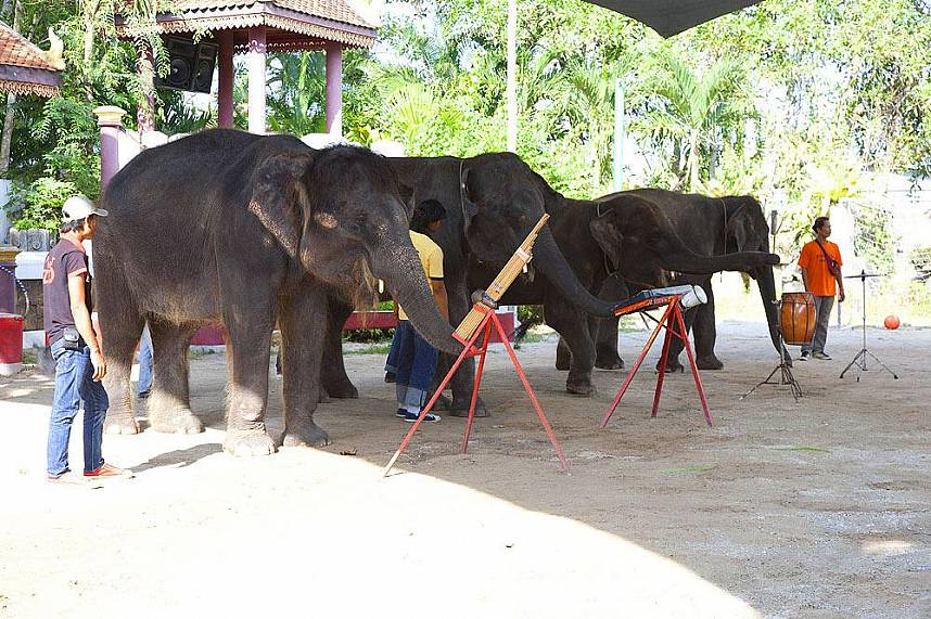 Phuket Zoo is a great family attraction