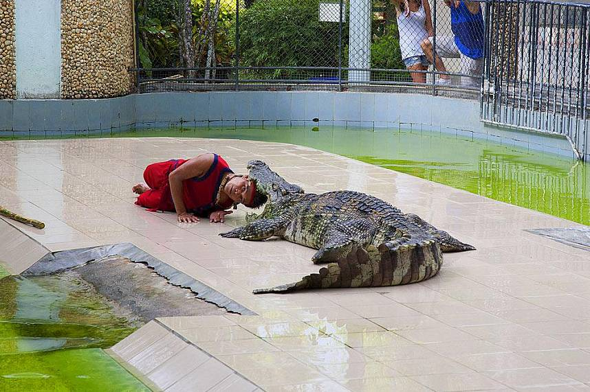 Spectacular crocodile show at Phuket Zoo