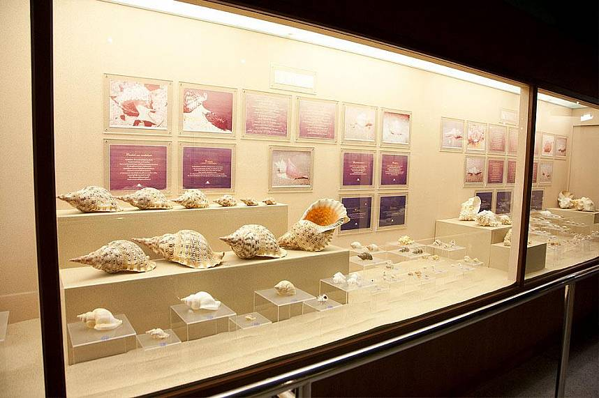 Phuket Seashell Museum is a great place for the whole family