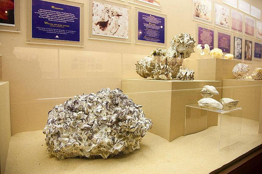 visit during your Phuket holiday the amazing Phuket Seashell Museum