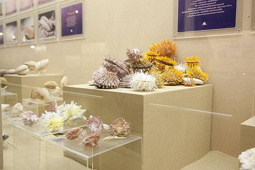 Phuket Seashell Museum offers a magnificent display of seashells