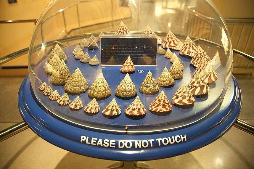 Phuket Seashell Museum is a great family attraction near Rawai Beach