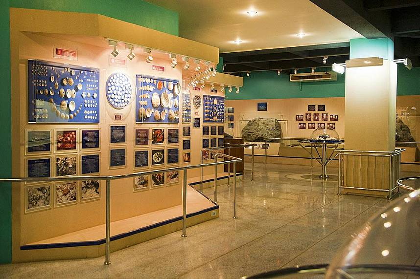 Get some knowledge about seashells in Phuket Seashell Museum