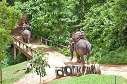 นั่งช้างเดินป่าที่ภูเก็ต
