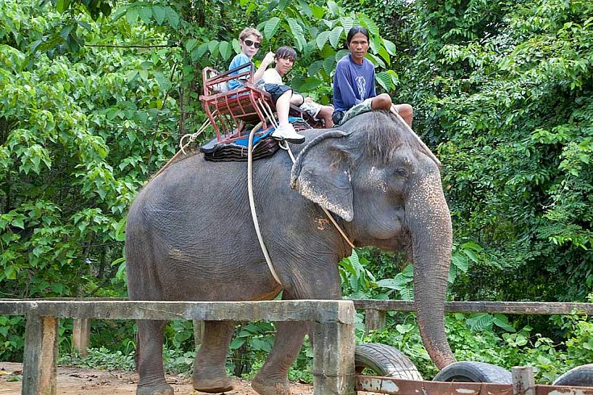 What a great adventure for tourists at Elephant Trekking in Phuket