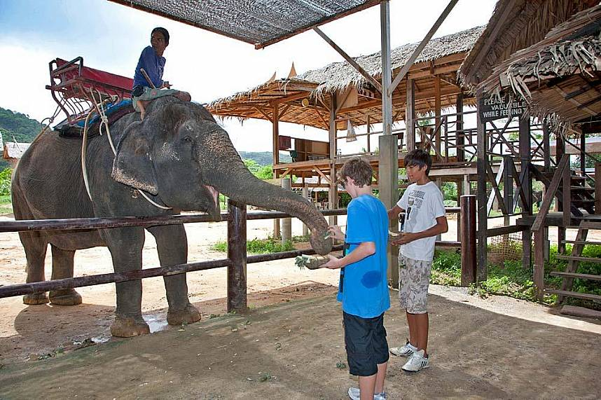 Get in touch with the elephants at Elephant Trekking in Phuket