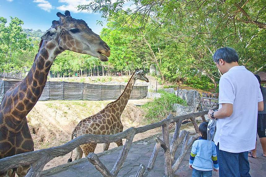 An enjoyable day for the family at Khao Kheow Zoo Pattaya