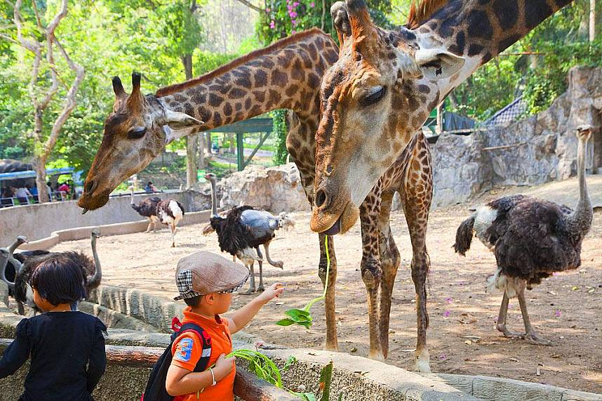 A great family day trip to the Chiang Mai Zoo