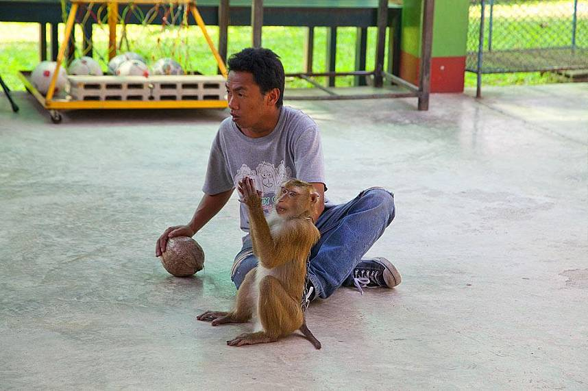 Get a unique experience during your Thailand holiday at Chiang Mai Monkey Center