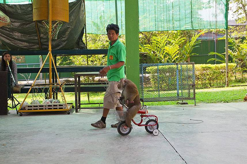 Fun entertainment for the family at Chiang Mai Monkey Center
