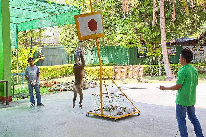 Monkeys show their skills at Chiang Mai Monkey Center