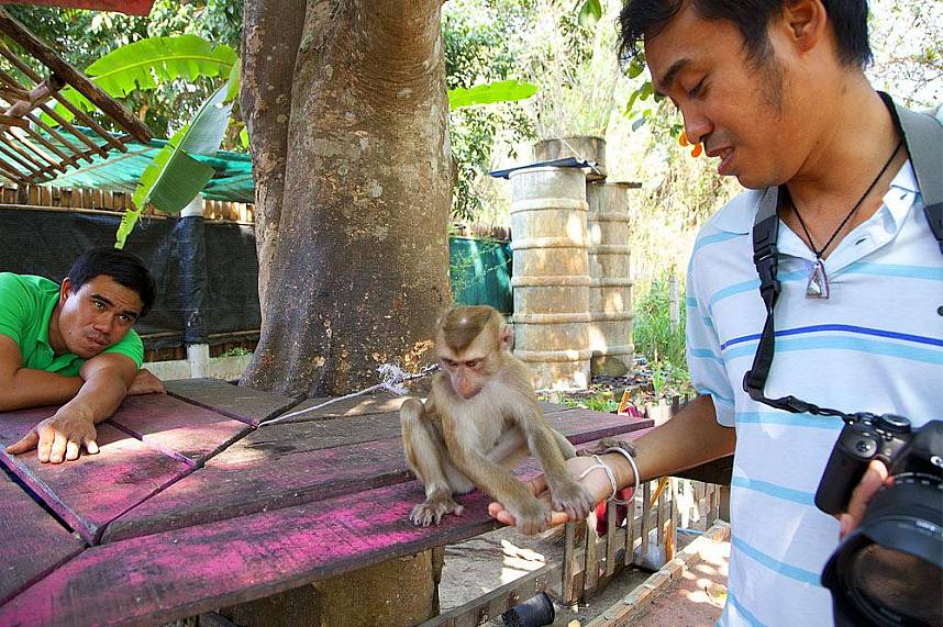Interact with the friendly monkeys at Chiang Mai Monkey Center