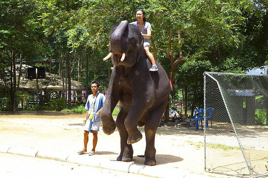 enjoy during your Thailand beach holiday the Namuang Safari Park at Koh Samui