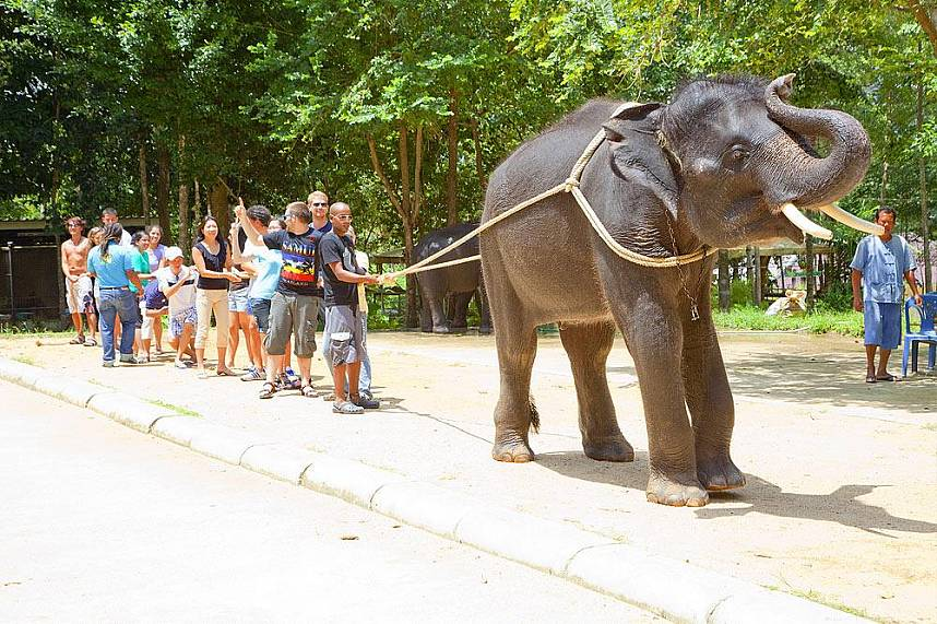 Compete with the strength of an elephant at Namuang Safari Park at Koh Samui