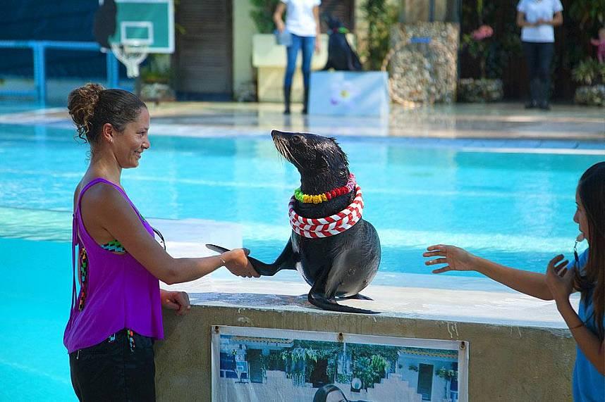 Enjoy the show during a visit at Samui Aquarium and Tiger Zoo