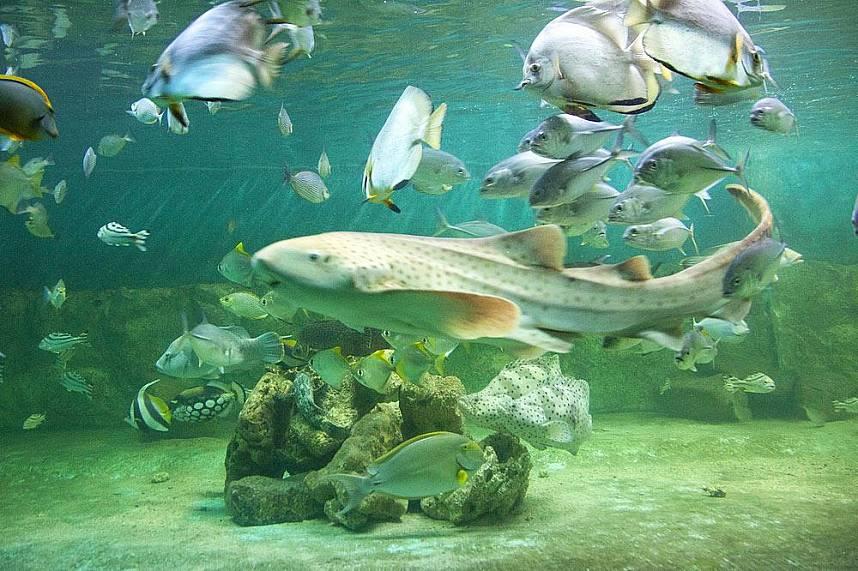 Get some great photo shots at Samui Aquarium and Tiger Zoo