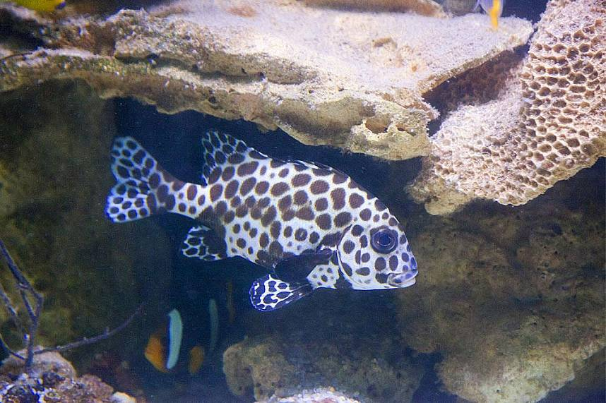Beautiful coral fishes at Samui Aquarium and Tiger Zoo