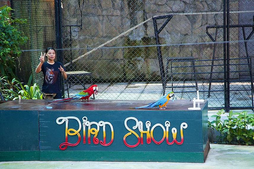 the bird show at Samui Aquarium and Tiger Zoo will give all kids a big smile