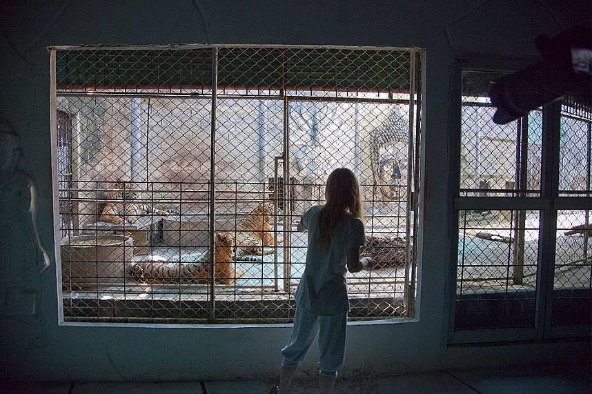 Close up of a tiger cage at Samui Aquarium and Tiger Zoo