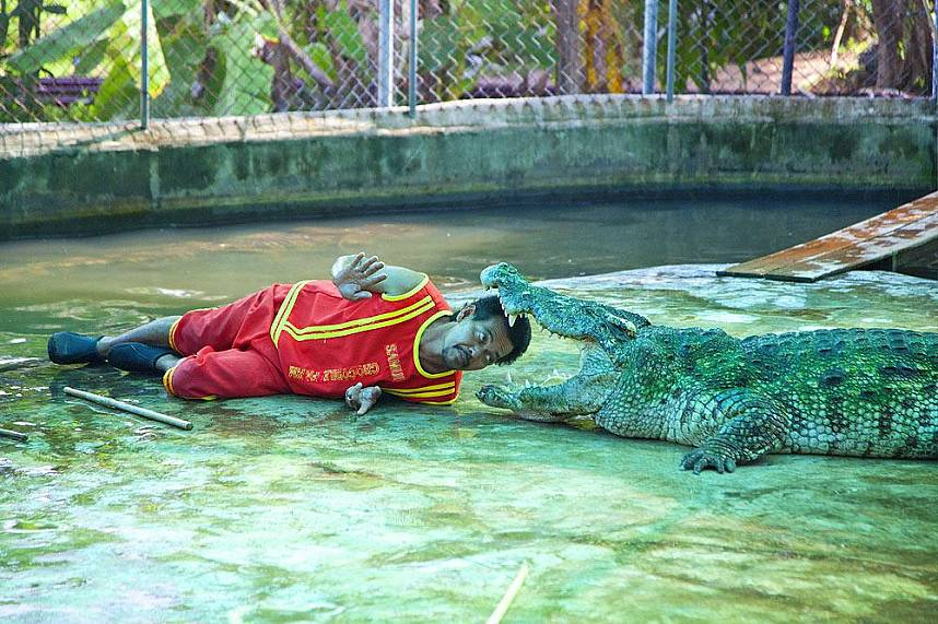 Astonishing show at Koh Samui Crocodile Farm