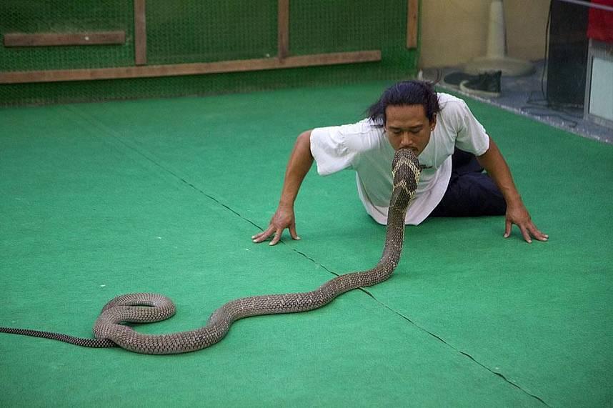 Cobra show at Koh Samui Crocodile Farm