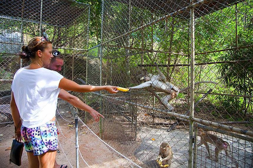Koh Samui Crocodile Farm is waiting for you