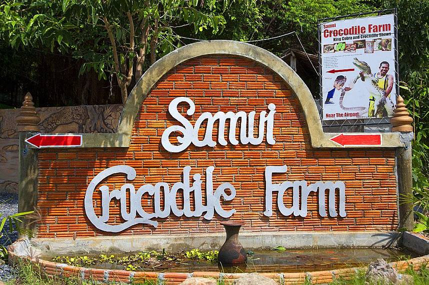 Koh Samui Crocodile Farm welcomes everybody