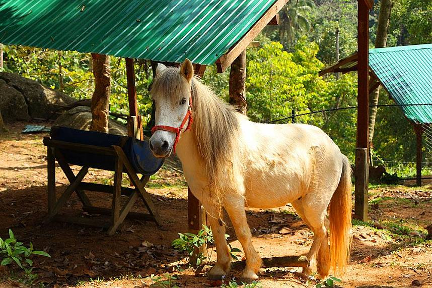 Paradise Park Farm Khao Pom Koh Samui is a fantastic place for families