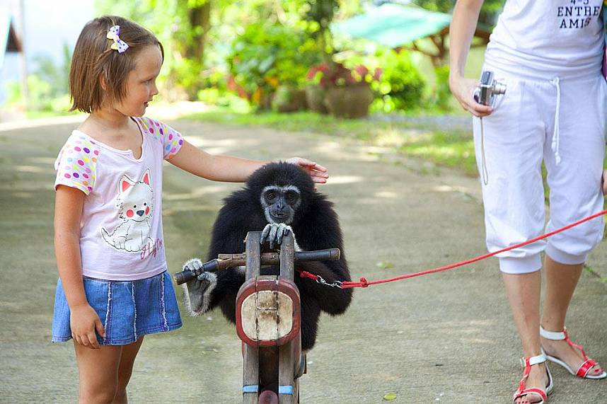Samui Paradise Park Farm at Khao Pom invites kids to touch local animals