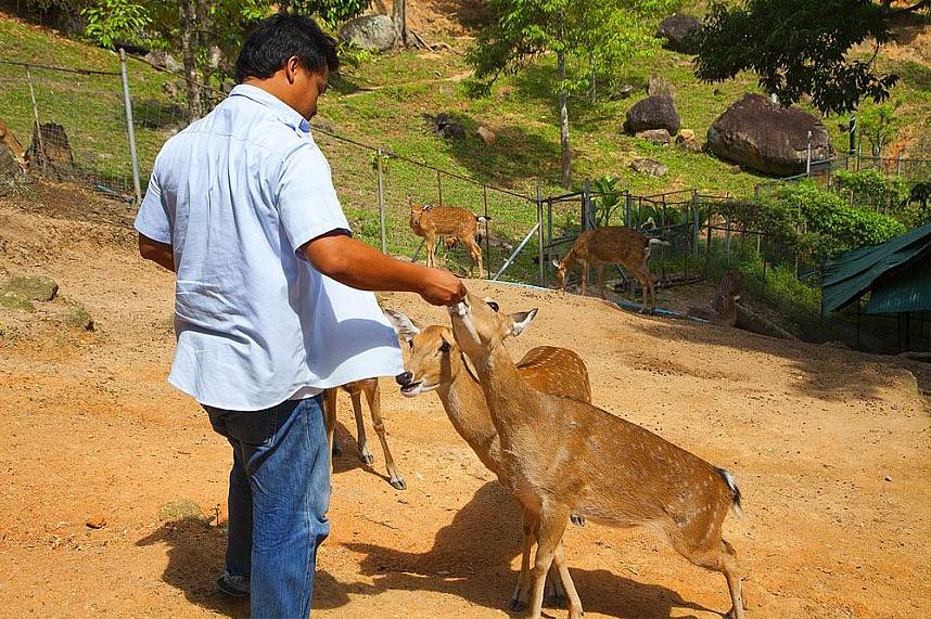 Samui Paradise Park Farm is a lovely place for a family day tour