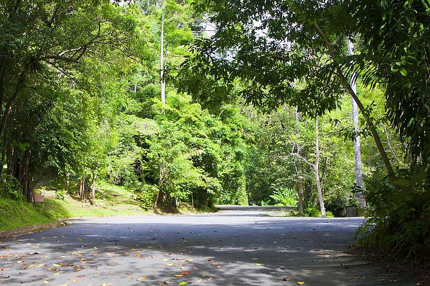 Road to the Get for one day away from Phuket beaches and enjoy the wonderful nature at Khao Phra Thrao National Park in Phuket