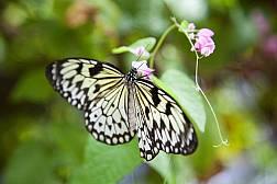 สวนผีเสื้อและโลกแมลงภูเก็ต
