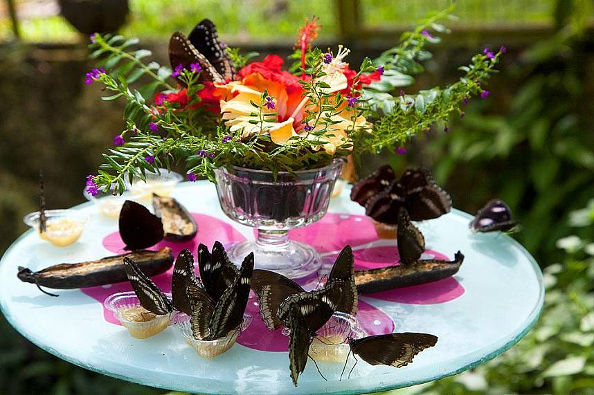 Watch the beautiful butterflies at Phuket