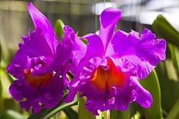 Phuket Orchideenfarm