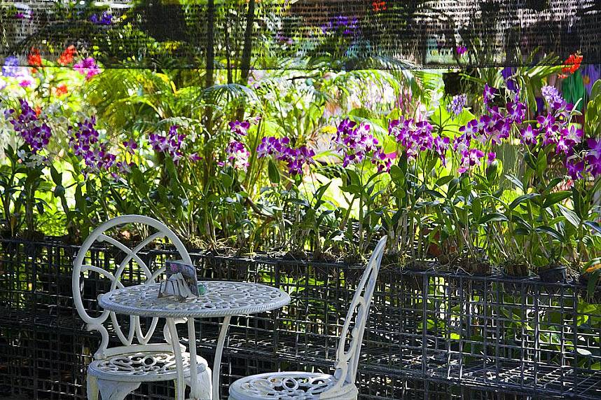 Have a rest and enjoy the famous orchids at Phuket Orchid Farm