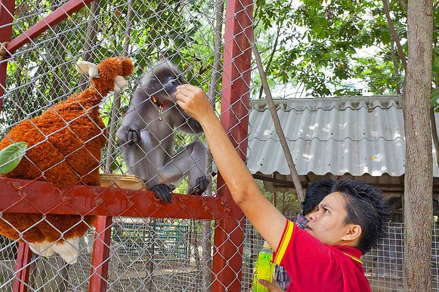 Funny animals awaiting families at Changthai Thappraya Safari and Adventure Park