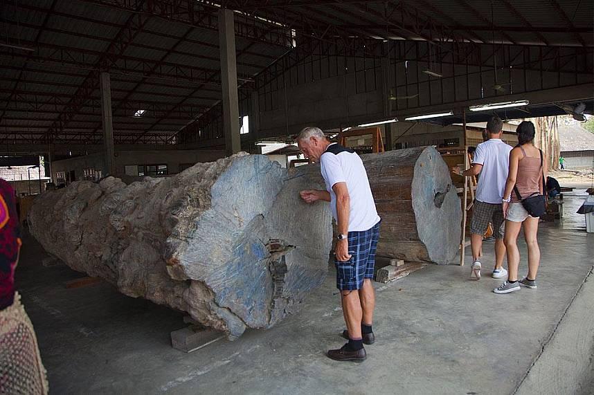 Huge old trunks of hardwood at Sudaluck Wood Carving