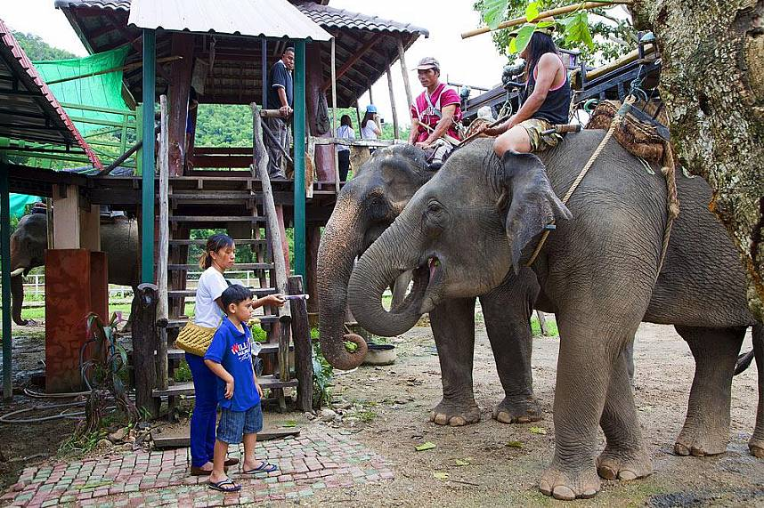 an Elephant ride during a one day trip around Chiang Rai will be a treat attraction