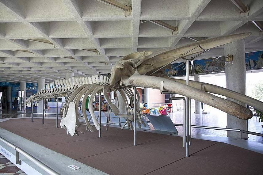 Education and fun - Bang Saen Aquarium Near Pattaya
