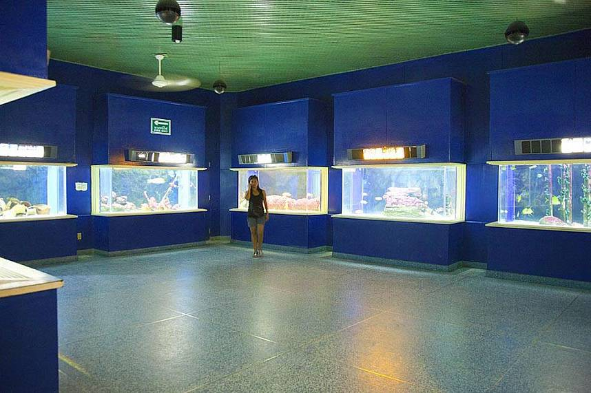 So much to see at Bang Saen Aquarium Near Pattaya