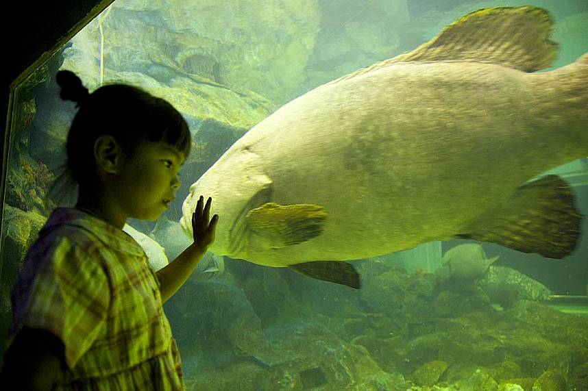 Amazing day for kids at Bang Saen Aquarium Near Pattaya