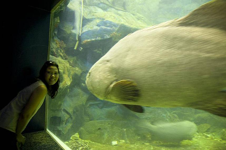 Great attraction for adults - Bang Saen Aquarium Near Pattaya