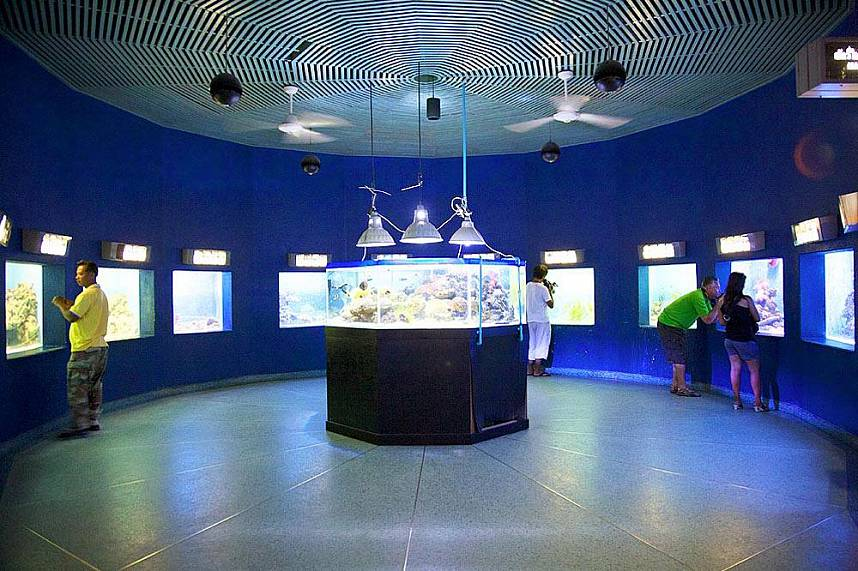 Bang Saen Aquarium Near Pattaya - great family attraction