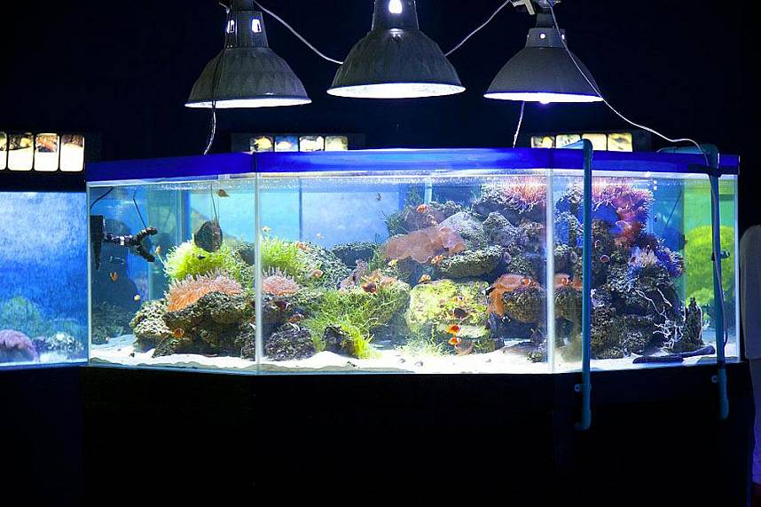 Amazing underwater world at Bang Saen Aquarium Near Pattaya