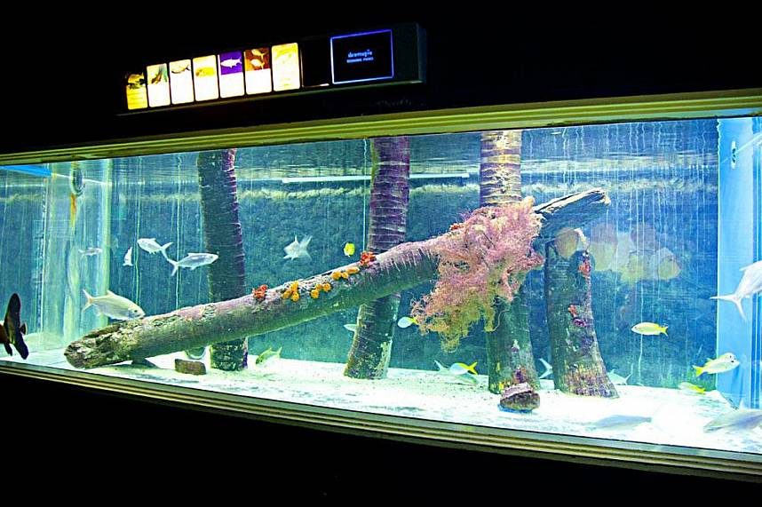 Real fun education at Bang Saen Aquarium Near Pattaya