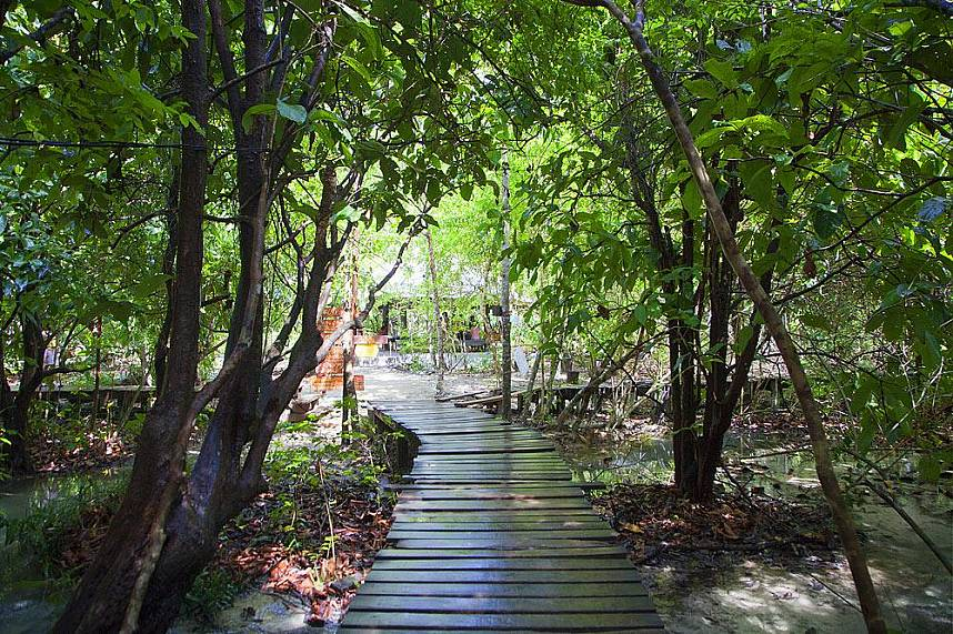 Small paths lead through mangrove forest to Emerald Pool Krabi
