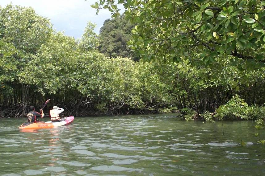 Krabi Sea Kayak Tours though a mangrove forest i