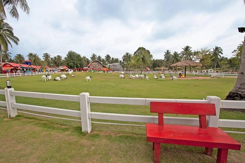 Farm animals are a great family attraction at Pattaya Sheep Farm Pattaya