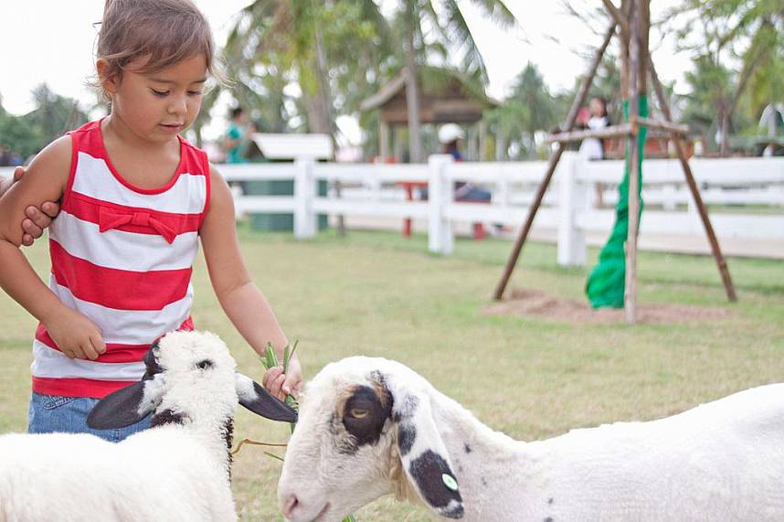 During your Pattaya holiday your kids will love to feed animals at Pattaya Sheep Farm Pattaya